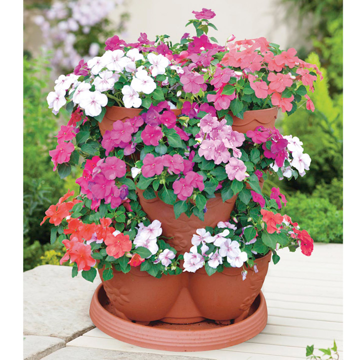 Impatiens Flower Planter & Plants - SPECIAL OFFER