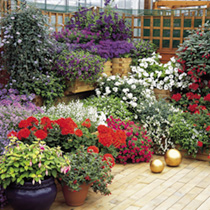 Bedding and Container Plants Lucky Dip - 18 Plants