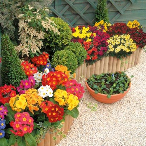 All Flower Plants Flower Plants Gardening Suttons