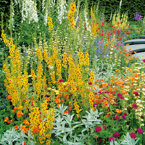 Perennial Plants - Collection