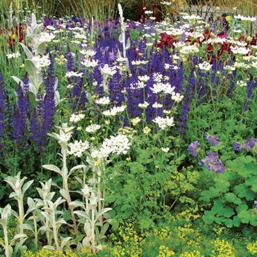 Perennial Plants - Cottage Garden Collection