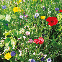 Wildlife Sanctuary Seeds - Cottage Garden Mix