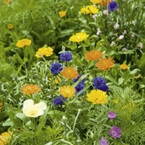 Perennial Plants - Special Offer Collection