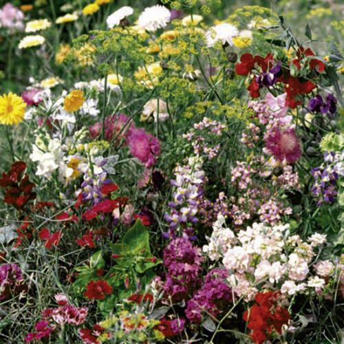 Summer Long Flowering Seeds - Mix