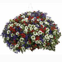 Colour Themed Plants - Pride of Britain Collection