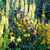 Perennial Plants - Lucky Dip Favourites Collection