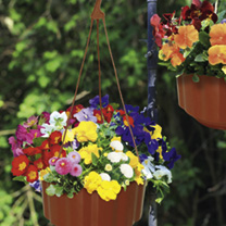 Autumn Pre-Planted Pot