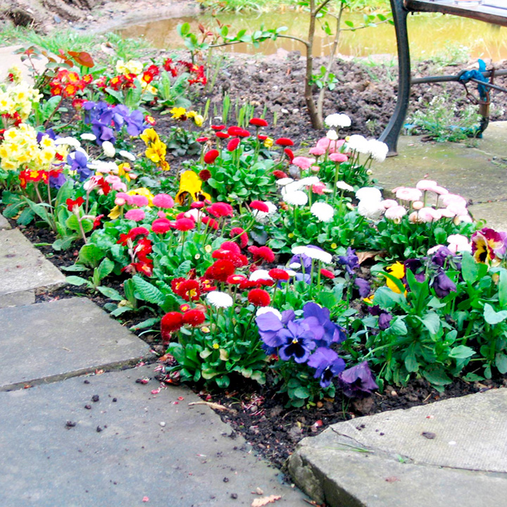 Winter Bedding Plant Collection