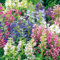Perennial Plants - Butterflies & Bees Collection