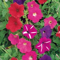 Propagation & Flower Seed Growing Kit