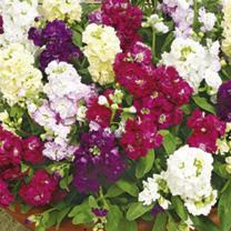 Stock Plants - Mixed