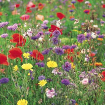 A colourful alternative to lawns and borders. Collection contains five individual packets of wild flower seed (should any of the varieties stated be u