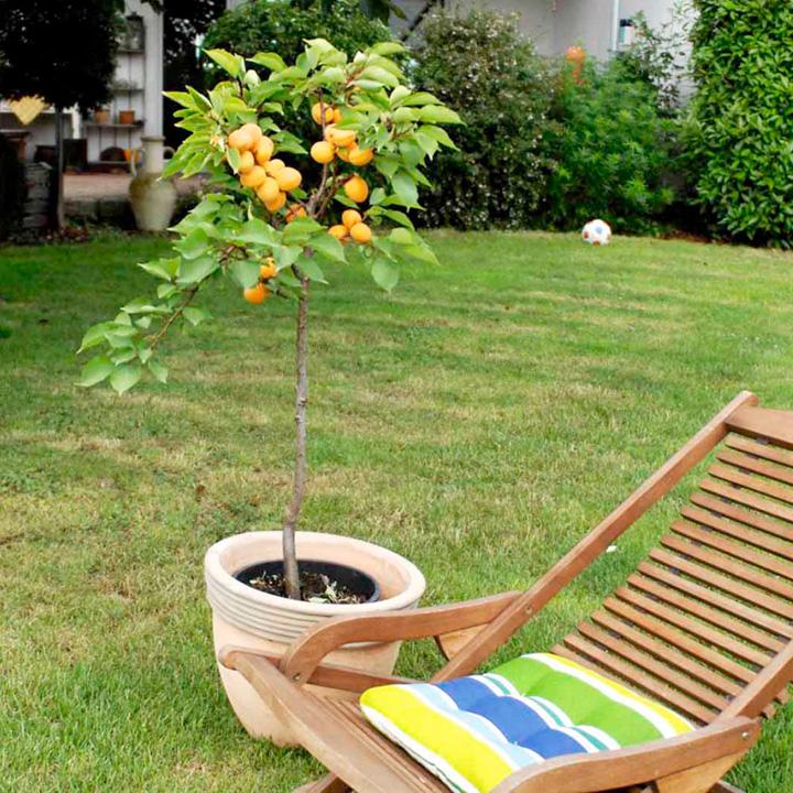 Fruttoni Apricot - Apricompact