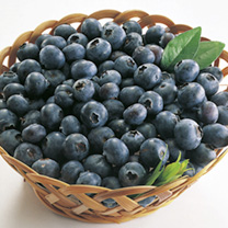 Blueberry Plant - Rubel