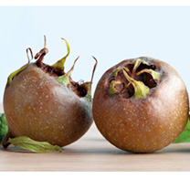 Produces fruit with an unusual truffle-like flavour. Ripens in early October. Store them for a few weeks to develop their full flavour. Supplied in a