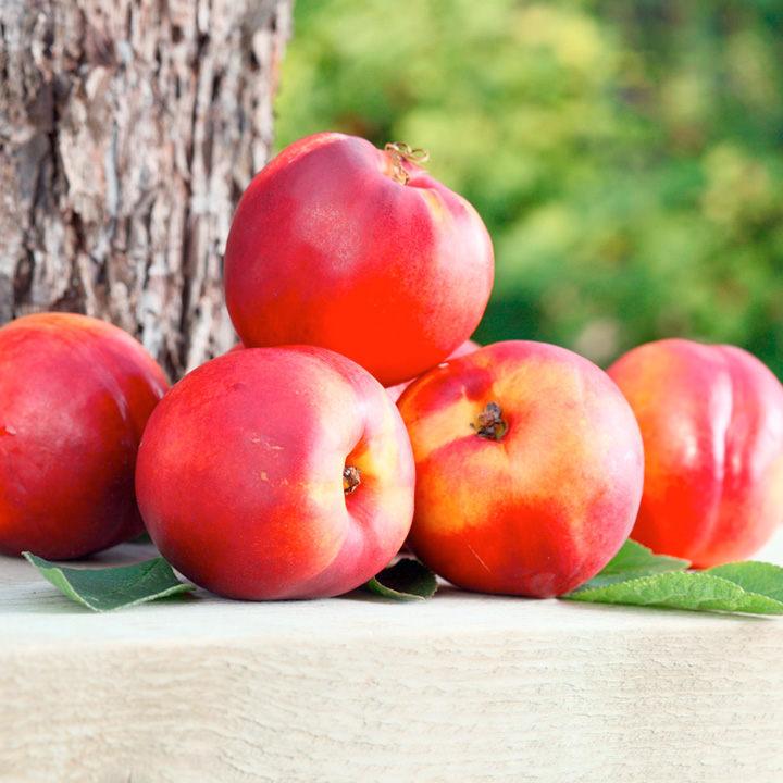 Nectarine Dwarf Fruit Tree