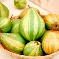 Pear Tree - Schweizerhose