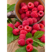 Raspberry Plants - Polka