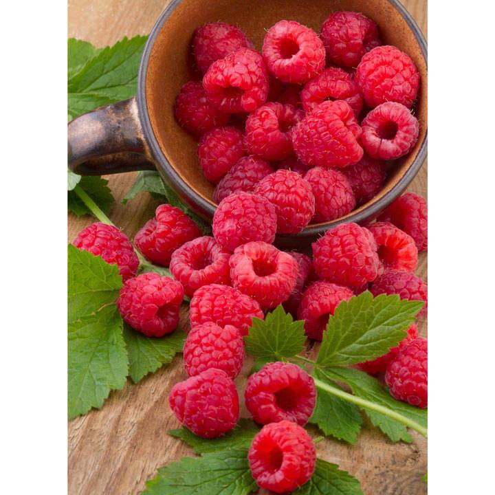 Raspberry Plants - Polka