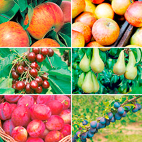 The Ultimate Orchard Collection