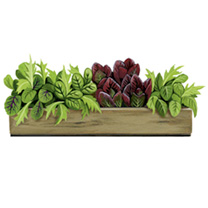 Personalised Crate Collection - Speedy Leaves