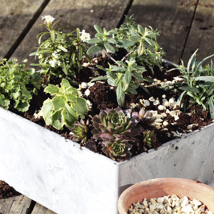 Alpine Planter