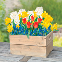 Spring Bulb Crate