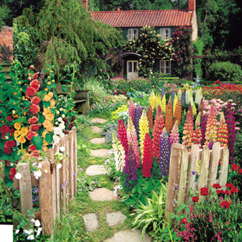 Cottage Garden Seed Collection