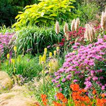Perennial Plants - Complete Garden Collection
