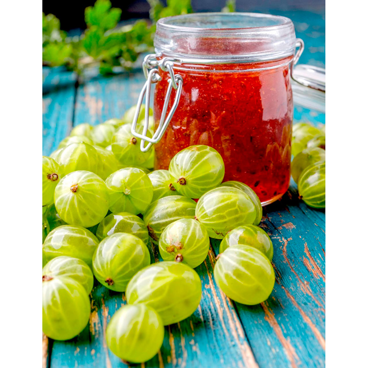 Gooseberry Plants - Collection