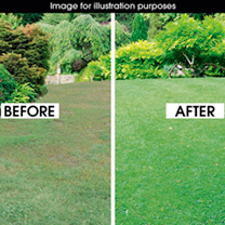Luxury Lawn Seed - 20Kgs