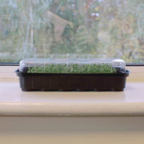 2 Windowsill Propagators + 4 FREE packets of seed