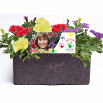 Petunia Trailing Plants - Fanfare Mix Rosy Cheeks Collection