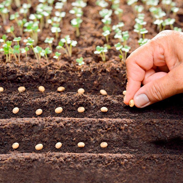Seedling Compost