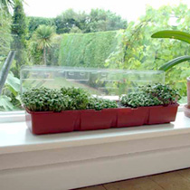 Windowsill Seed Kit - Microgreens