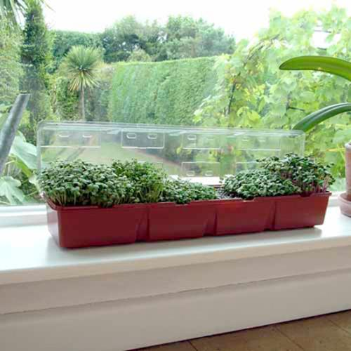 Windowsill Seed Kit - Salads