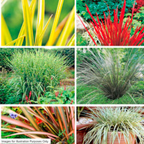 Perennial Plants - Grasses & Foliage Collection