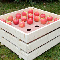 Picture of Apple Tray click through for more info