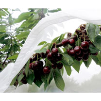 Cherry Aid® Fruit Tree Sleeves