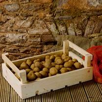 Potato Chitting/Storage Trays