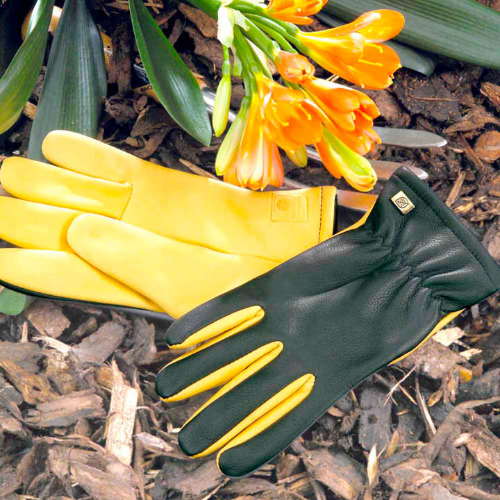 Dry Touch Gloves