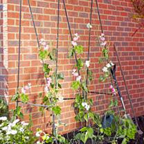 Easy Flower Grow Frame - 2.4 x 1.2m