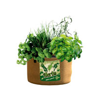 Pick herbs fresh from the patio or balcony every day there's nothing quite like it to add a real flavour punch to your cooking! Measures 32. 5cm (13)