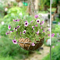 Add charm to your garden with this metal hanging basket! Welded steel coils with natural coco fibre liner give this basket a delicate look without sac