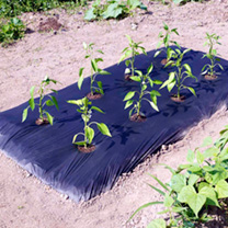 Long-lasting Multi-use Mulch Film - PICK & MIX