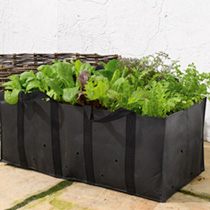 Salad Planting Bag and Natural Willow Surround