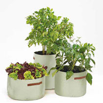Patio Vegetables Kit plus FREE Seed Kit