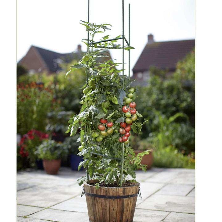 Tomato Cage Kit
