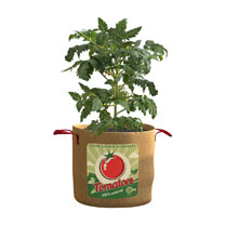 A fantastic container in which to grow a bumper crop of tomatoes. Measures 50cm (20) diameter x 37cm (14) high. 72 litres. Large fold-up planters that