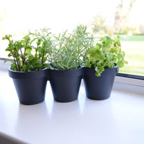 A robust plastic planter, perfect for growing a trio of tasty herbs on your kitchen windowsill! Optional drainage holes. Measures 29cm (11) length x 1